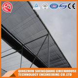 Kommerzielles Stahlkonstruktion PC Blatt-Gewächshaus für Frucht