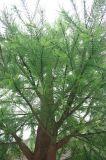 Árvore de cedro artificial da planta artificial
