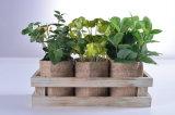 Plantas verdes de las decoraciones de interior con el yute/el papel que empaquetan encapsulamiento de madera