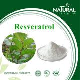 Natürlicher Pflanzenauszug 98% Resveratrol durch HPLC Riesiger Knotweed Auszug