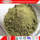 Proteína orgânica vegetal por atacado do cânhamo para cuidados médicos