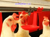 Capezzolo Drinking per Poultry Farming House con House Construction