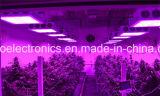 도매 온실 또는 의학 플랜트 옥수수 속 LED는 가득 차있는 스펙트럼을%s 가진 빛을 증가한다