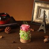 Flor preservada para el regalo de cumpleaños del día de tarjeta del día de San Valentín