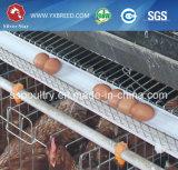 Sistema automático de la jaula de la capa del pollo para Zambia