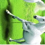 100%Polyester druckte weißes Pferd Pigment&Disperse Gewebe für Bettwäsche-Set