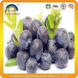 Extrato azul da baga do suplemento orgânico à uva-do-monte