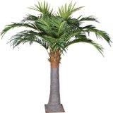 Árvores de coco tropicais da paisagem de Beautiflul