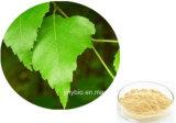 Estratto del foglio della betulla di Flavonoides 5% di alta qualità