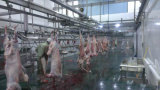 가금 집에 있는 닭 가축 돼지와 양을%s 자동적인 도살 기계