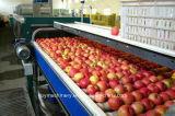 Terminar a linha de produção do sumo de maçã