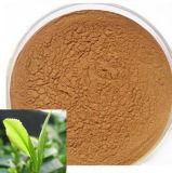 Extrait de plantes naturelles d'extrait extrait de Tribulus Terrestris (99%)