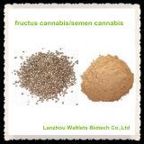 Polvo del extracto del cáñamo del semen de Natual de la alta calidad