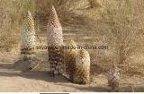 Estratto immune naturale di Cistanche Deserticola di 20:1 di 10:1 di sostegno