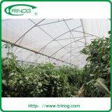 Hoch entwickeltes Hydroponics Greenhouse für Vegetable