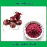 Extracto de la raíz de la remolocha/L./proteína vulgaris beta