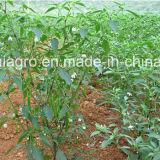 Peperoncini rossi rossi asciutti Withstem del Yunnan