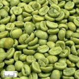 Acido clorogenico verde del chicco di caffè