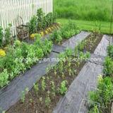 Tela tecida PP do controle de Weed da agricultura
