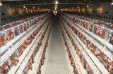 Jaula Breeding galvanizada de la capa de la batería de la granja del pollo con introducir automático