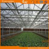 야채를 위한 Multispan 상업적인 유리제 온실