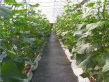 Control de Weed tejido plástico Agrotextile