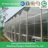 Tipo fabricantes de China Venlo del invernadero