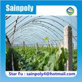 Estufa poli do túnel do fabricante de China para a uva