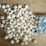 Origine bianca pura fresca della Cina dell'aglio (5.0cm ed aumentano)