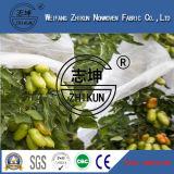 I pp Filare-Legano il prodotto non intessuto per la pianta, frutteti