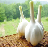 Чеснок с белой кожей, чисто белый чеснок Jinxiang нового урожая свежий