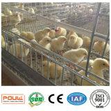 층 보일러 어린 암탉 닭을%s 자동적인 가금 농기구 감금소