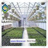 Handelsgemüse verwendetes PC Blatt-Gewächshaus für die Landwirtschaft