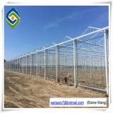 Estufa de vidro profissional de China para a pimenta