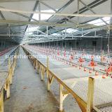 Équipements automatiques de ferme avicole de qualité