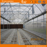 Seeding를 위한 다중 Span Plastic Film Greenhouse