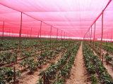 Het tuinbouw Systeem van de Schaduw van de Zon van de Serre