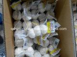 Neuer Jahreszeit-chinesischer frischer Knoblauch-normales weißes u. reines Weiß