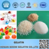 Fabrik Supply Gelatin mit Best Price