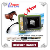Recharegable Battery를 가진 디지털 Portable Vet Ultrasound Device (BW570V)