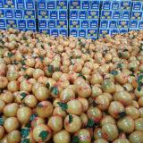 Cinese che esporta il pomelo fresco standard del miele