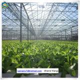 Chambre verte commerciale de serre chaude en verre professionnelle avec le bon système de refroidissement