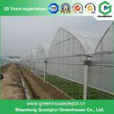 Serre chaude en plastique d'agriculture pour des légumes/fleurs