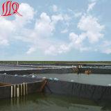 HDPE Geomembrane de la calidad del precio de fábrica el mejor para la charca de pescados
