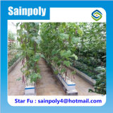 Serra idroponica usata agricola di alta qualità di basso costo