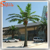 가정 훈장 인공적인 옥외 야자수 코코야자 나무