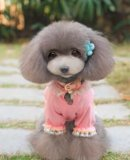 Roupa colorida do cão dos produtos do animal de estimação dos presentes do Natal (E007)