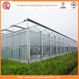 Serres chaudes de Multi-Envergure de feuille/en verre de PC/film plastique pour l'agriculture/film publicitaire