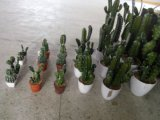 Piante e fiori artificiali della pianta succulente