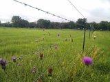 Колючая проволока загородки фермы